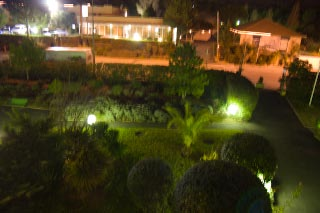 Palmeting